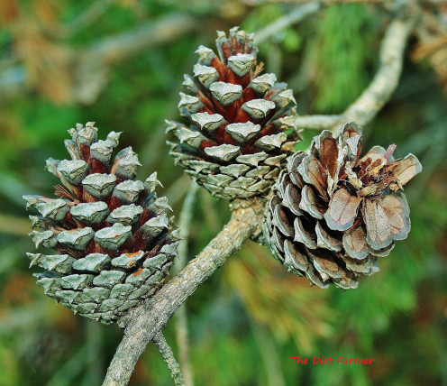 Some plants, like pine, prefer acidic soil.