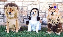 Halloween and Your Pet - 7 Helpful Hints (Recipe)