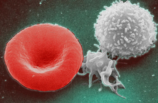 Platelets are separated from red blood cells