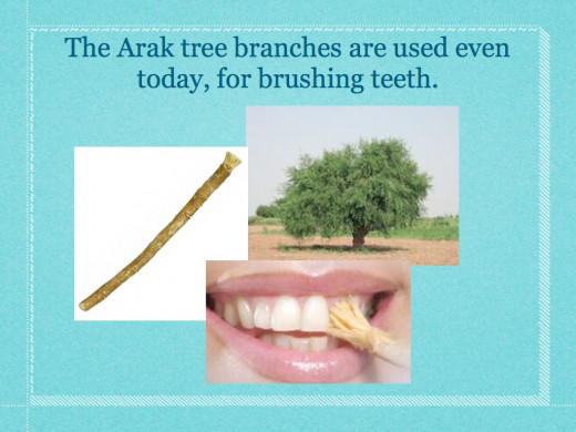 From the Miswak as a natural toothbrush website.
