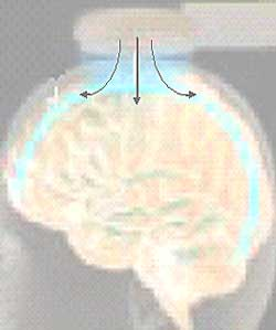 Plasticity is the brain's ability to be elastic and moldable.