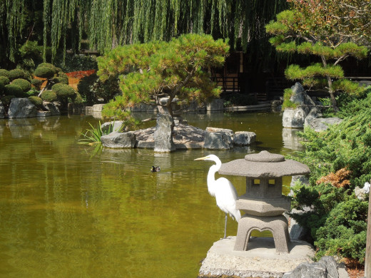 An Egret in Japanese Friendship Garden San Jose CA