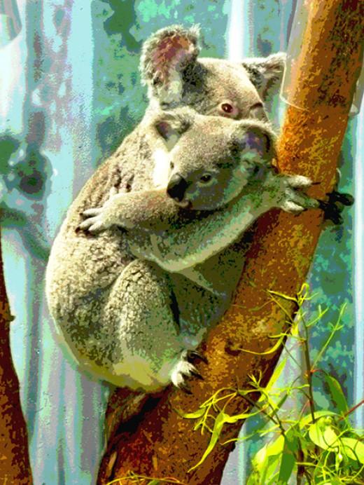 Koala cub & mom