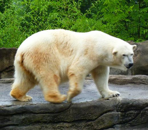 Polar pacing