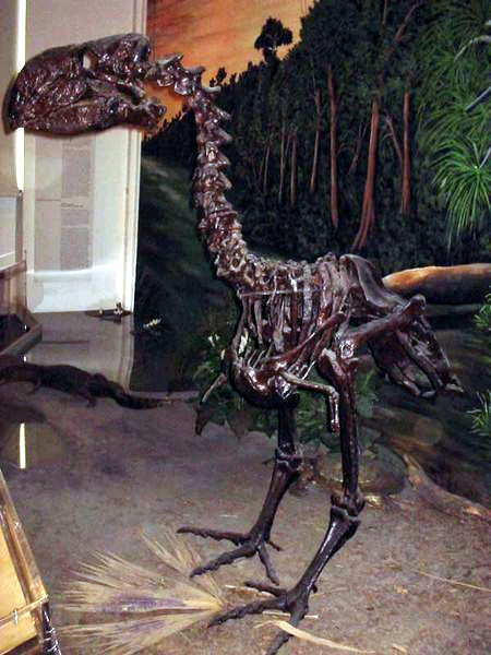 Not all the dinosaurs died out 65 million years. Feathered varieties known otherwise as birds survived, with some evolving into monsters such as Gastornis.