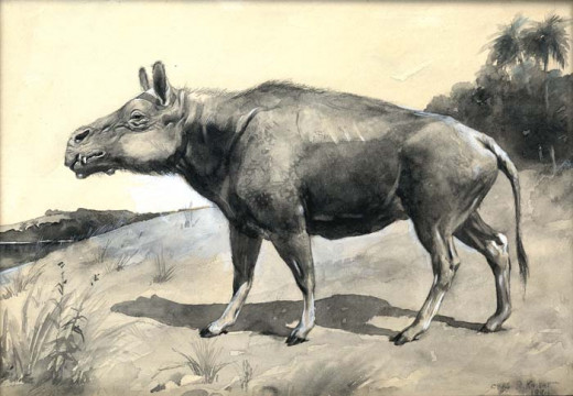 Entelodon was a possible ancestor of modern pigs. It possessed small tusks which may have been used by males when fighting over mates.