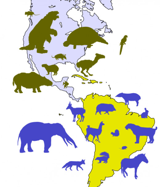 The great faunal interchange saw both North and South America become home to new species of animal which migrated over the Isthmus of Panama.