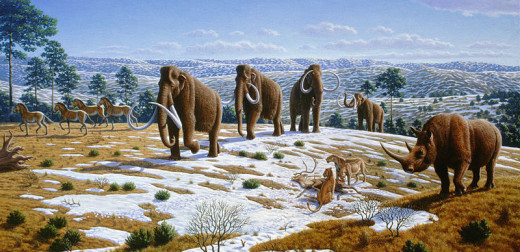 As a response to the extreme cold of the ice age , many mammals either became larger or grew large fur coats such as the woolly mammoth.
