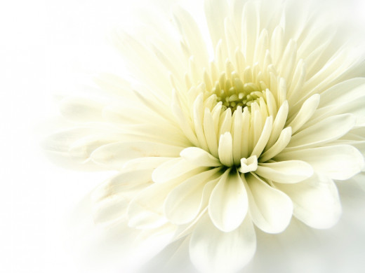 A white flower always imparts a sense of simplicity to a photograph.