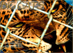 Top 10 Big Cat Zoos In The U.S.
