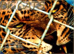 Top 10 Big Cat Zoos In The U.S.