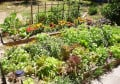 Tips for Raised Bed Gardening