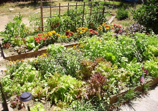 Raised Bed Gardens