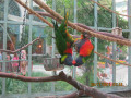 Wild Thing ~ Online Dating For Zoo Animals ~ Its A Jungle Out There