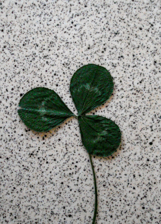 Three-leaf Clover: Christian Reminder of the Trinity