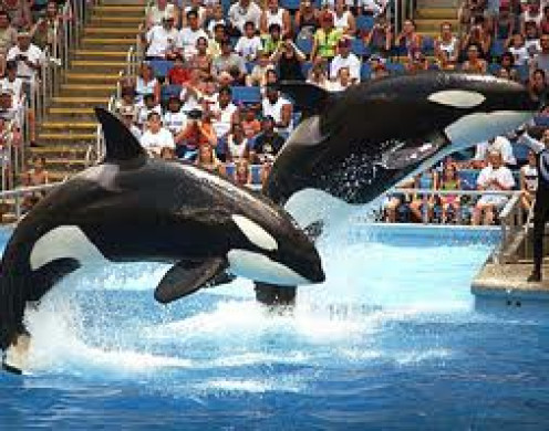 The Sea World Dolphin Show is the most popular attraction at the park. The show is done several times per day and the dolphins show their brains.