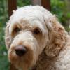 kitkat1141 profile image
