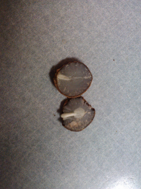 The seeds either held a spoon or a knife.  See the knife tip and the spoon?  They are clearly visible!