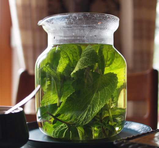 Lemon balm brewing into tea.