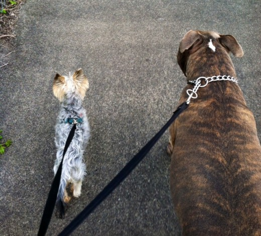Walking the dog is a great way to break a sweat (although, I think they love it more than we do!)