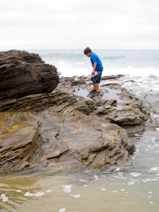 Searching the Crystal Cove tidepools, Newport Beach