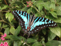 The World's A-Flutter: Spending the Day Among Nature's Most Beautiful Winged-Insects at The Butterfly Place Pavilion