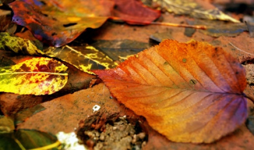 I used the macro setting to get a close-up of these leaves.