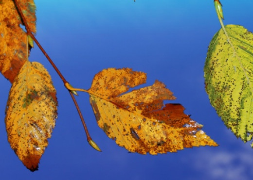 I used a fill-flash to allow these leaves to show up against the sky.