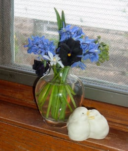 Mixing black Pansy with Blue Muscari creates an intense little bouquet in a clear glass vase. I placed the chicks next to them for more interest.