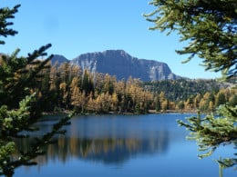 The gold of larch across a lake at 8000 ft