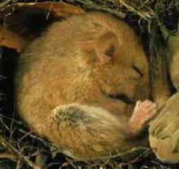 Animal Hibernation Pictures