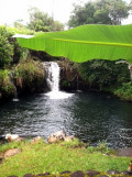 The pond on my family's property (Wailuku river); we used to swim and catch sword-tail guppies together here (^-^)