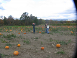 Pumpkin picking, October 2010