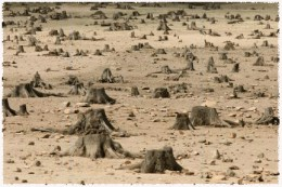 When a forest is clear cut so wood can be used for lumber, paper and the like, it all too often is not replanted. The land now unprotected is not suitable for animal life and other plants. It overhears and dries up. Soon this will turn to desert.