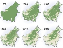 This is a series of maps of Borneo from 1950, the near present and projected future where deforestation has left little of the original forest.