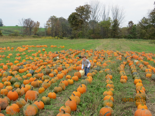My grandson picking out a pumpkin..yes there were white ones too.