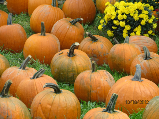 A closer look at the pumpkins
