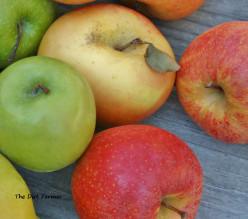 Cardamom Applesauce Recipe
