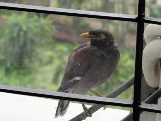 Birds around....through my window glass.