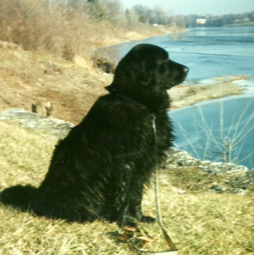 Ebony on the banks of the Maumee River at Napoleon. (Photo by Barbara Anne Helberg, 2001 -- My favorite)