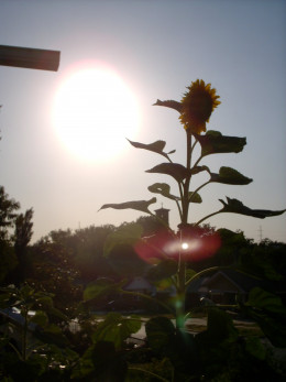 sun's searing light