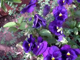 sensuous flower's perfume the yard