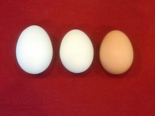 The first white egg is a typical, commercially produced egg.  The second & third are from our chickens.  Smaller, fresher and delicious; with brighter yolks, indicating lots of nutrients.