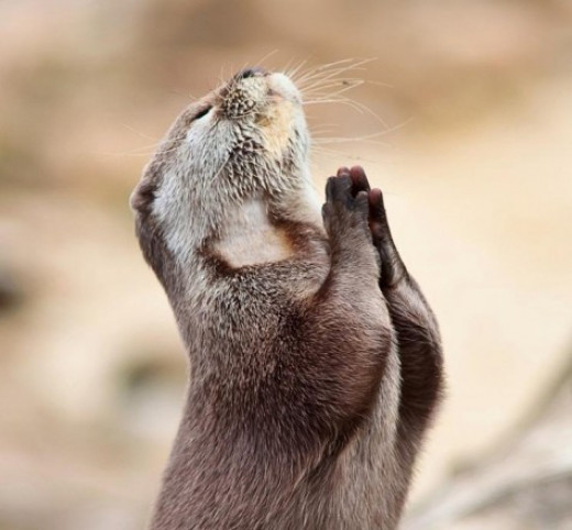 If only animals could pray too. But their innocence and purpose God put them in this World, give the animals a special place for their souls in Heaven.