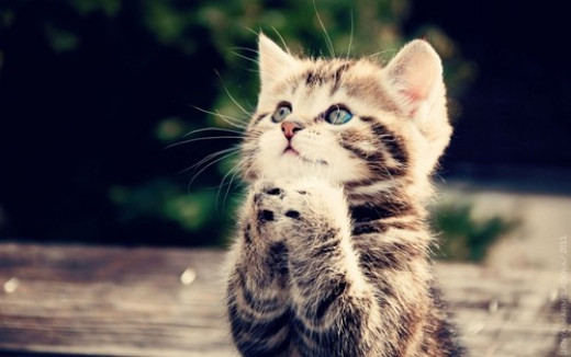 """Please God, help my furry friends at the shelters find loving homes. Please protect and keep the other animals safe from harm. Please enlighten man from hurting my friends of all species for their greediness. Bless my masters God for they love me."""