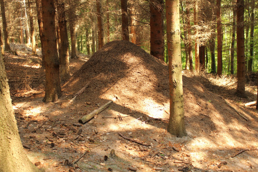Mounds like this are the source of food for the anteater