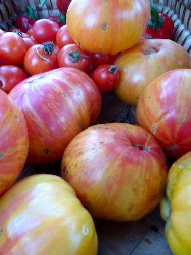 Stripes vary with each fruit. Some tomatoes are very stripped, while other tomatoes have peachy yellow skins and no stripes all on the same vine.