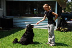 Some tips on dog-training