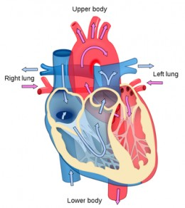 A healthy lifestyle is essential to keep your heart in optimum condition