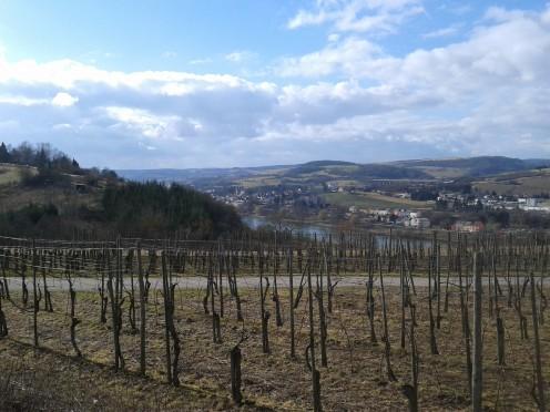 Vineyards, Oberbillig
